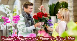 Top 8 Wonderful Flowers and Plants To Give A Man