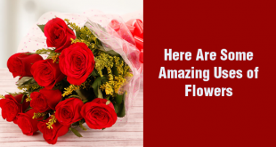 6 Amazing Uses of Flowers