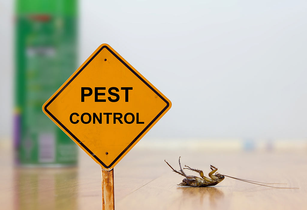 Why Should You Hire a Pest Control Company for Your Office? | Blogging Heros