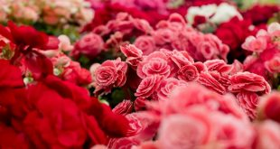 Complete Guide For Choosing Floral Gifts